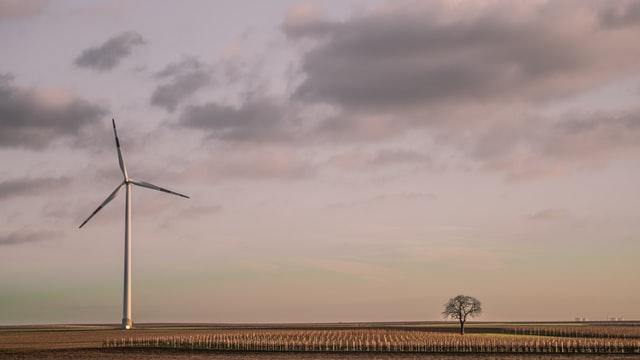 Wind turbine and tree on landscape
